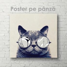 Poster, Pisică de modă