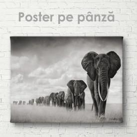 Poster, Turma de elefanți