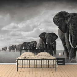 Fototapet Animale, O turma de elefanți