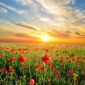 Fototapet, Apusul de soare într-un câmp cu maci