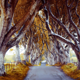 Fototapet, Copaci înalți