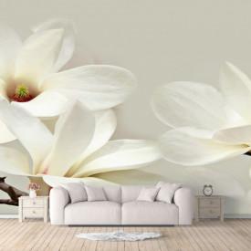 Fototapet, Floarea albă de magnolie pe un fundal gri