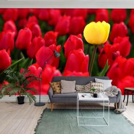 Fototapet Flori si Plante, Lalele galbene printre roșii
