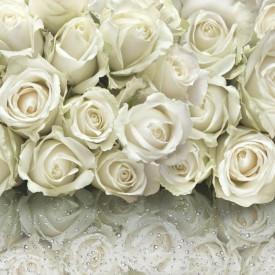 Fototapet, Reflexia trandafirilor albi