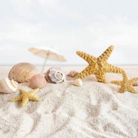 Fototapet, Scoici și stele de mare pe plajă