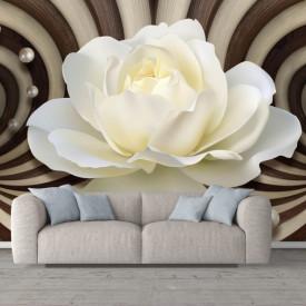 Fototapete 3D, Trandafir alb pe un fundal de linii abstracte maro
