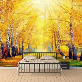 Fototapete Pădure însorită