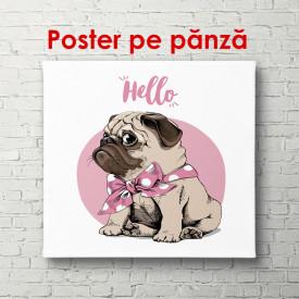 Poster, Câinele Pug pe un fundal roz