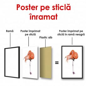 Poster, Flamingo pe fundal alb