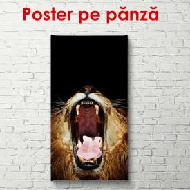 Poster, Leul