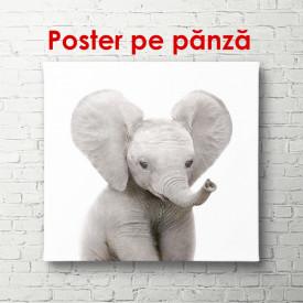 Poster, Pui de elefant pe un fundal alb