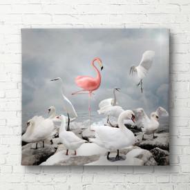 Tablouri Canvas, Flamingo roz