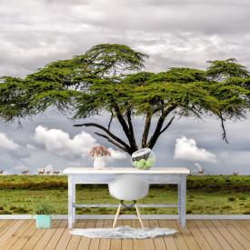 Fototapet, Copacul din savană