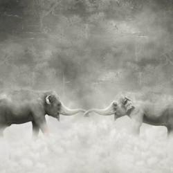Fototapet, Elefanți în nori
