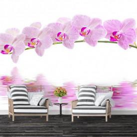 Fototapet, Reflecția orhideelor