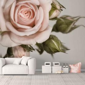 Fototapet, Un trandafir bej
