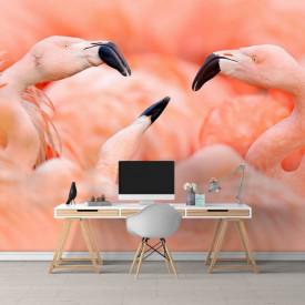 Fototapete, Flamingo roz