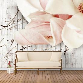 Fototapete, Flori roz,gingașe
