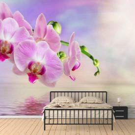Fototapete, Orhideie roz la răsăritul soarelui