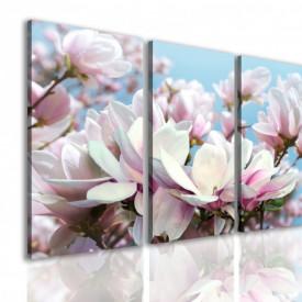 Multicanvas, Magnolia împotriva cerului.