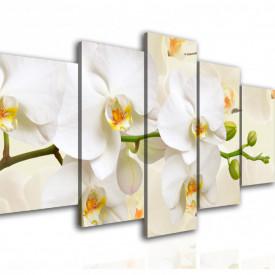 Multicanvas, Orhideea albă pe fundalul bej.