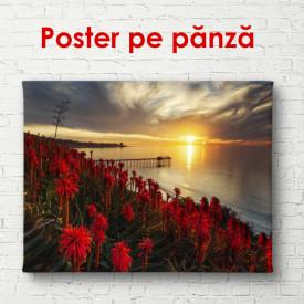 Poster, Câmpul de flori pe fundalul apusului