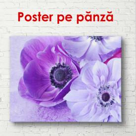 Poster, Flori de primăvară violet