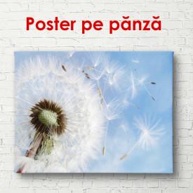 Poster, Păpădia pe un fundal de cer albastru