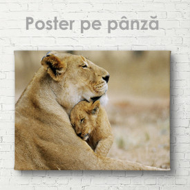 Poster, Pui de leu cu mama