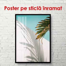 Poster, Umbre de palmier tropicali