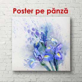 Tablou, Iris pictat în acuarelă pe fundal alb