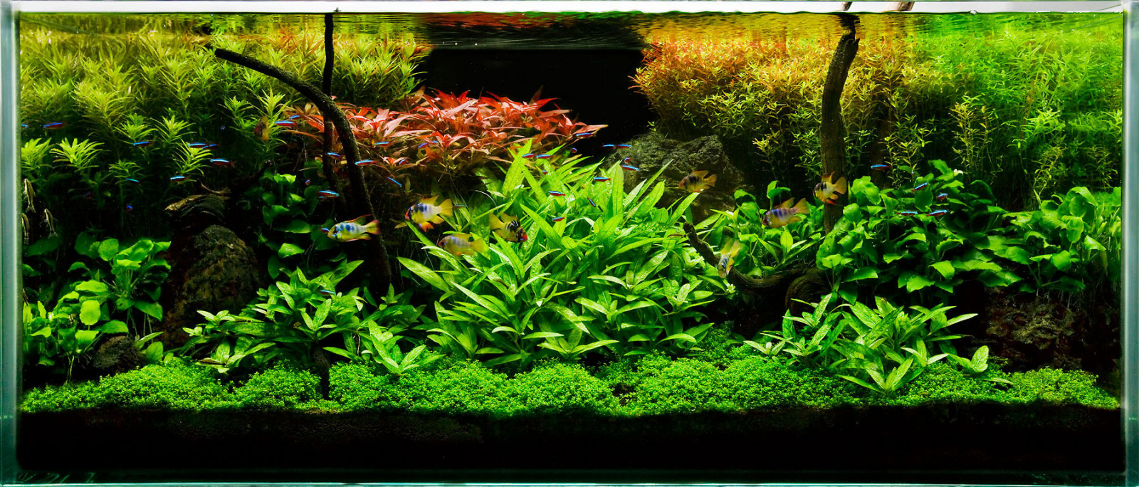 Fertilizantii au un rol extrem de important in acvaristica.