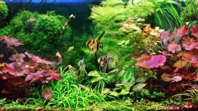 Iluminatul acvariului!