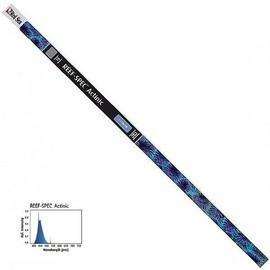 Neon acvariu marin Red Sea Reef Spec T5 Actinic 22000K-24W