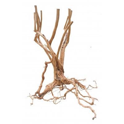 Radacina Wood Stump / pret kg