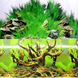 Fundal acvariu model Comori subacvatice / Arbore cu moss 40 cm inaltime