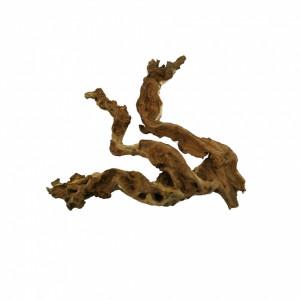 Radacina Coral Wood / pret/kg