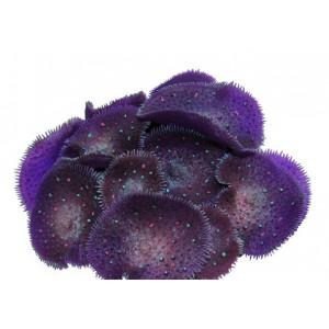 Decor acvariu Reef Siliconic Y107 - OCEAN FREE