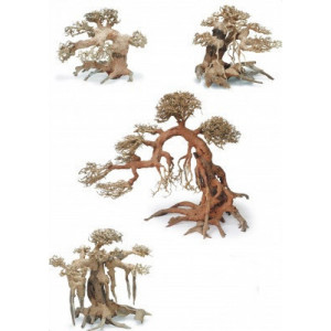 Bonsai wood S 15-22 cm