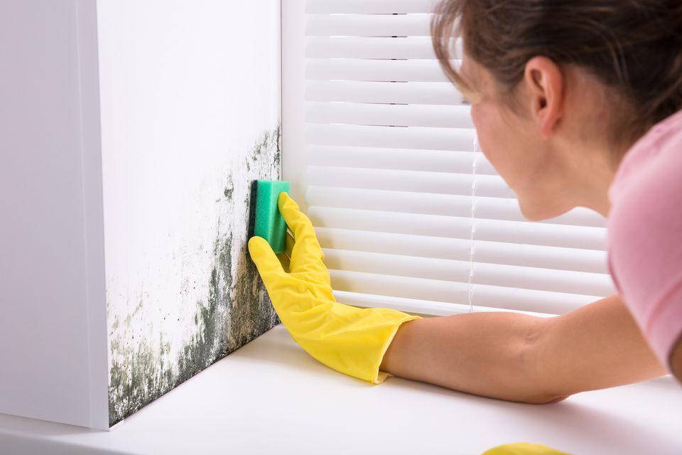 Soluții antimucegai - Cum scapi de mucegai de pe suprafețele din casă