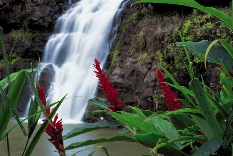 Tablou Cascada cu Flori