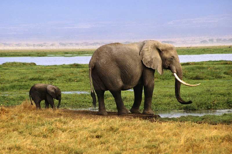 Tablou Elefanti Mama si Pui