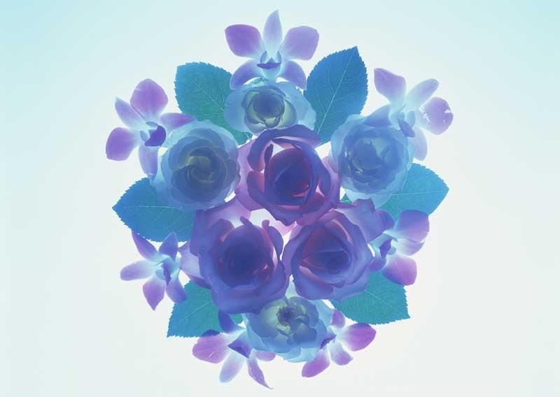 Tablou Petale de Floare
