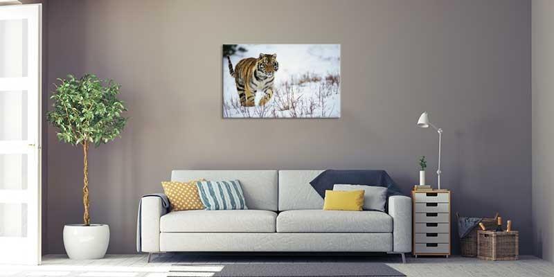 Tablou Tigru in zapada