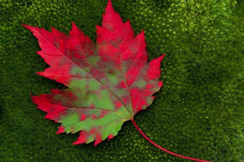 Tablou  Frunze de toamna