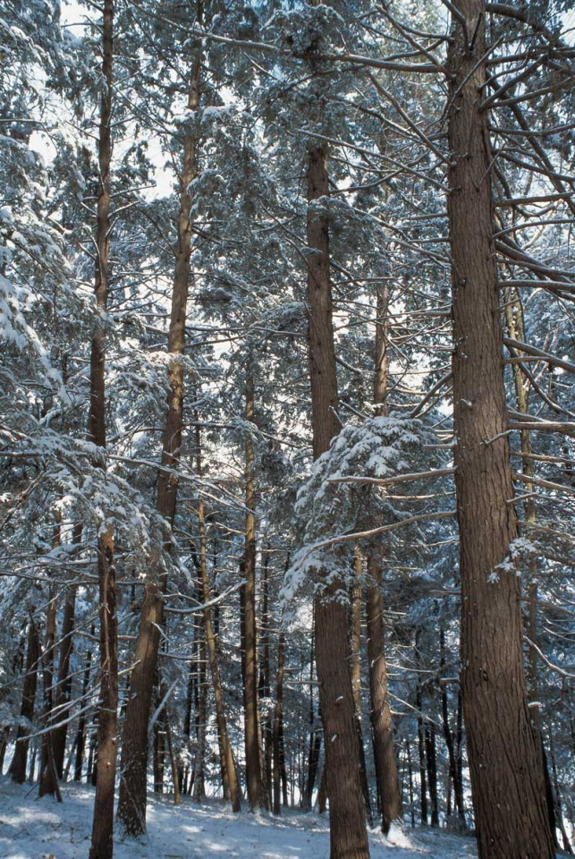 Tablou Padure Iarna