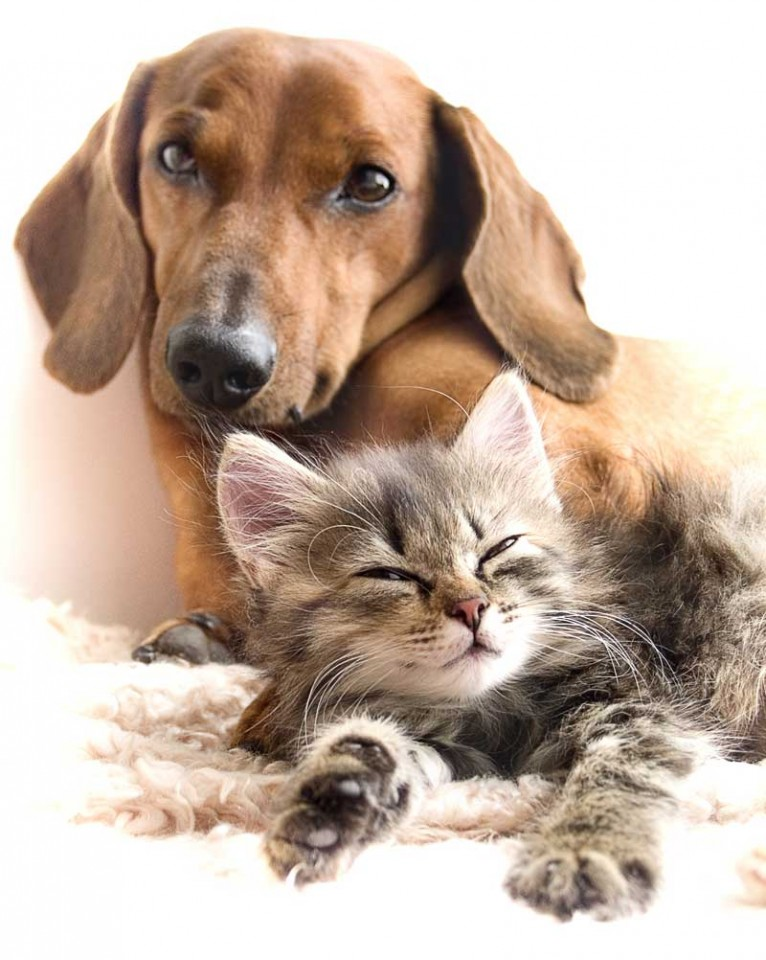 Tablou Caine si Pisica