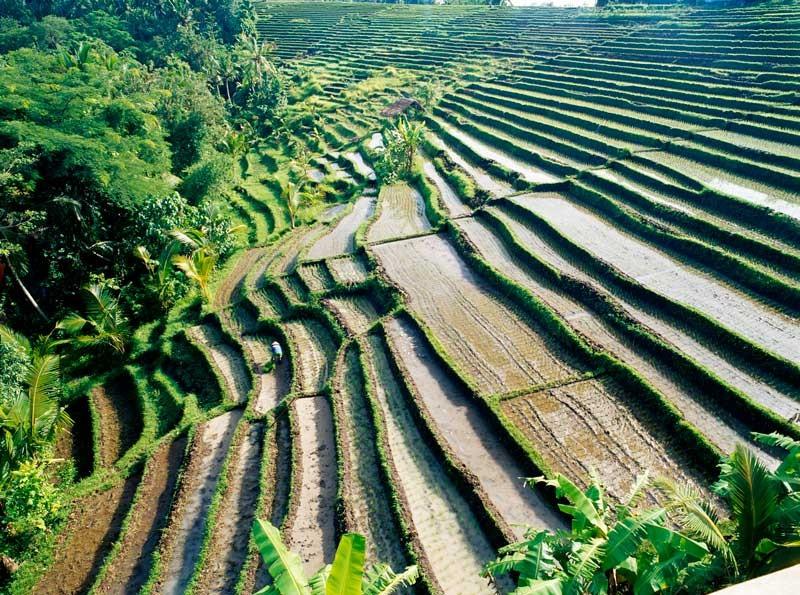 Tablou Peisaj Asia