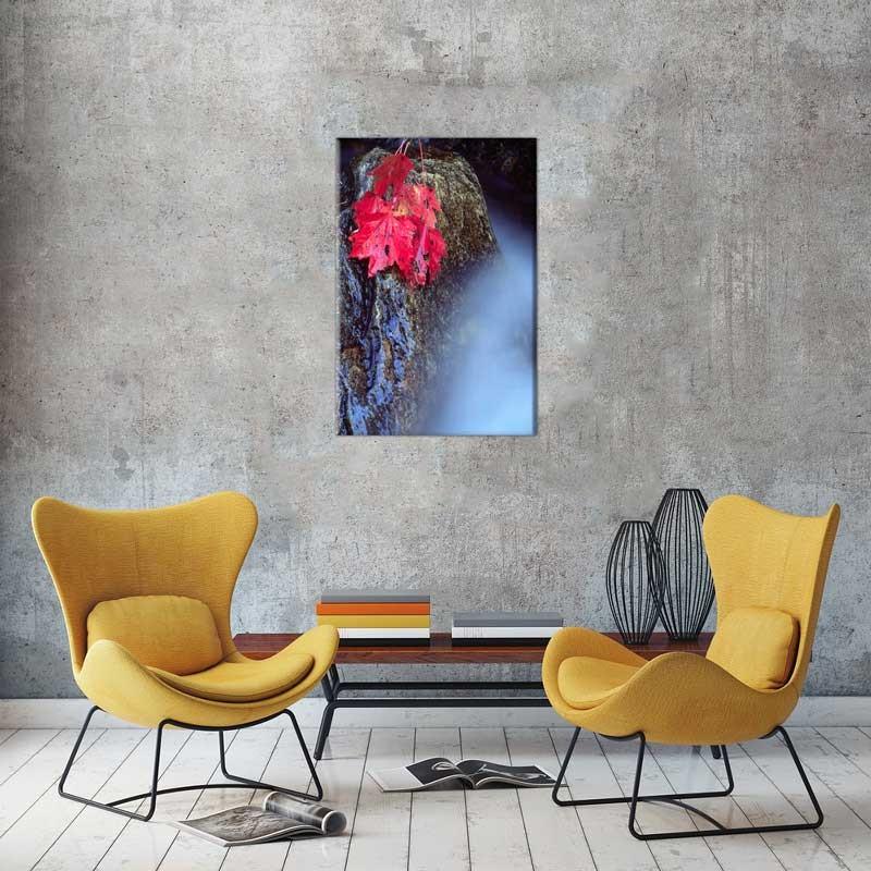 Tablou Frunze rosii pe pietre