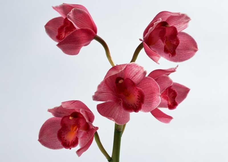 Tablou Orhidee